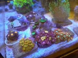 Desmonte aquário marinho