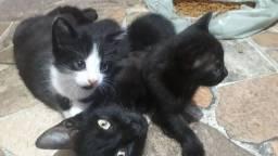 Precisamos de famílias urgente para os gatinhos