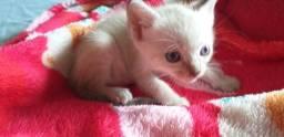 Doando gatinhas ajudo na castração ?