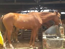 Vendo esses lindos cavalos ou aceito troca por algo do meu interesse.