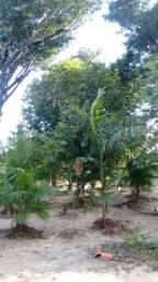 Vendo uma casa em araticum-miri município de Marapanim