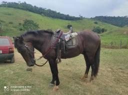 Cavalo bom pá mexer com gado
