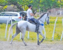 Cavalo direita