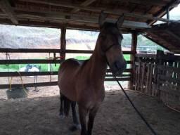 Cavalo bom sela