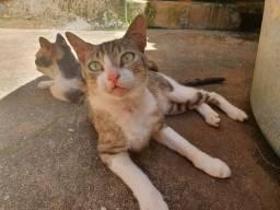 Doação de gato macho, castrado