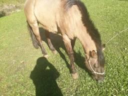 Cavalo com toda documentação em dia