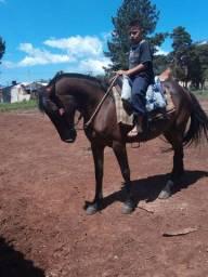 Cavalo marchador  vendo ou troca por outro machador