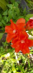 Roseiras, cactos, orquídeas etc