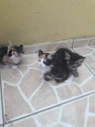 Doam-se gatos (filhotes)