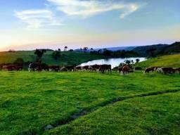8271   fazenda à venda em reserva do iguaçu