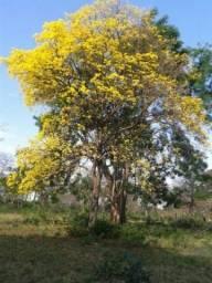Lindíssimas Áreas as Margens do Rio Nioaque