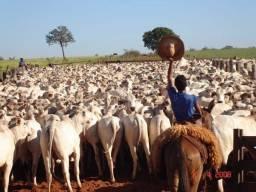 Fazenda para Investimento de Gado