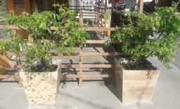 Jarro de alvenaria com pé de cajamanga