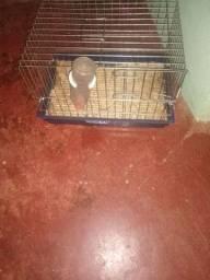 Vendo gaiola para coelho ramister porquinho da índia