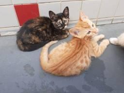 Doação de filhotes de gato