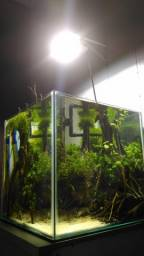 Aquário cubo Anápolis
