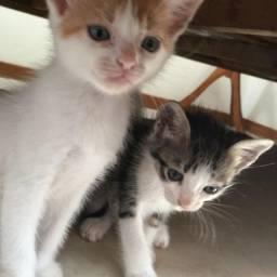 Filhote gato