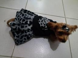 Vestidos para cães