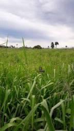 Sítio à venda por R$ 1.350.000 - Zona Rural - São Miguel do Guaporé/RO