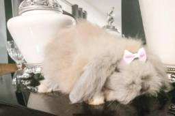 Mini coelho mini fuzzy