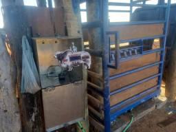 Balança de gado bovina