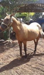Vende - Se Cavalo Criolo ?