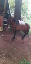 Vendo um cavalo