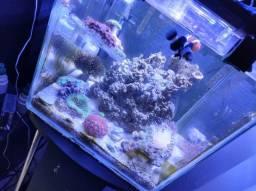 Vendo aquário marinho