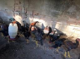 Frangos e frangos