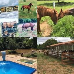 Cavalos rancho barra bonita