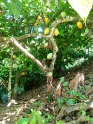 Fazenda com 70 ha em Coroaci - Ba