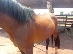 Cavalo manga larga com pecherom