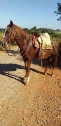 Égua manga larga mansa 8 anos (Aceito trocas)