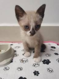 Linda gatinha para adoção