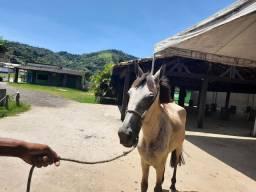Cavalinho pra criança manso e de picada com sela