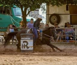 Cavalo quarto de milha PO