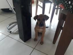 Cadela resgatada precisa de um lar