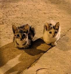 Doação de gato macho e gatinhos
