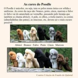 Clube dos poodles grupo de whatsapp
