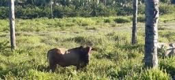 Fazenda no Maranhão