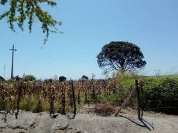 Vende-se terreno 1 hectare 10.000 metros quadrados