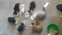 Adoção responsável filhotes gatos São Pedro da Aldeia