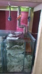 Aquário Jumbo 1450 litros