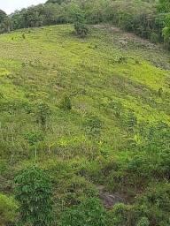 2 hectares em Joaquim Gomes