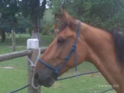 Cavalo troco por égua