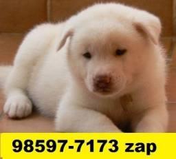 Canil Filhotes Cães Premium BH Akita Dálmata Rottweiler Boxer Labrador