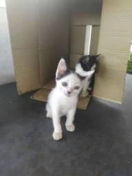 2 gatinhos machos