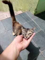 Linda gatinha disponível para adoção responsável