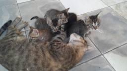 Doação de gatinhos(Entrego)
