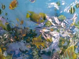 Cortina plástica para banheiro aquário